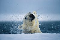 Fauna & Flora: Wildlife photography by Paul Nicklen