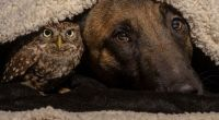 Fauna & Flora: owl and dog friends