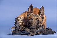 TopRq.com search results: owl and dog friends