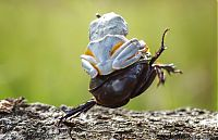 Fauna & Flora: frog riding a beetle