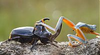 TopRq.com search results: frog riding a beetle