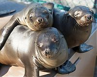 TopRq.com search results: rescuing young sea lion pups