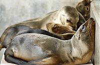Fauna & Flora: rescuing young sea lion pups