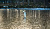 TopRq.com search results: Siberian Husky on a frozen lake