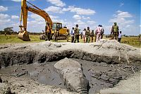 rescue of an elephant stuck in mud