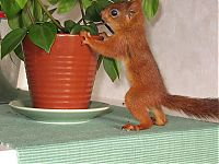 TopRq.com search results: arttu, squirrel pet