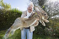 TopRq.com search results: darius, the biggest rabbit