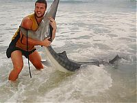 TopRq.com search results: tiger shark catch