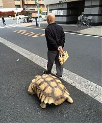 TopRq.com search results: giant pet tortoise