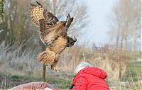 TopRq.com search results: eurasian eagle owl lands on a head