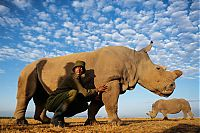 TopRq.com search results: White rhinoceros under the protection, Ol Pejeta Conservancy, Laikipia County, Kenya