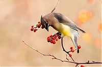 TopRq.com search results: wildlife photography