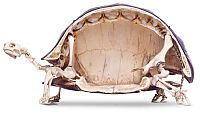 Fauna & Flora: tortoise from inside