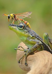 TopRq.com search results: frog and the wasp