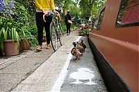 TopRq.com search results: Duck lanes by The Canal & River Trust