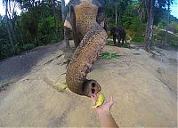 Fauna & Flora: elephant taking a selfie