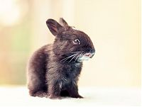 TopRq.com search results: cute bunny rabbit growing