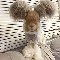 TopRq.com search results: cute bunny rabbit with big ears