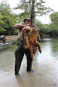 TopRq.com search results: alligator snapping turtle