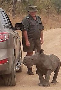 TopRq.com search results: baby rhino searching for his mother