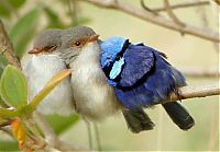 TopRq.com search results: birds cuddling