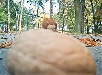 TopRq.com search results: squirrel with a nut