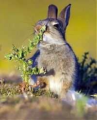 TopRq.com search results: rabbit eating a plant