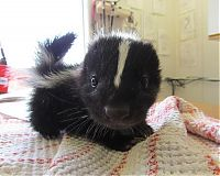 TopRq.com search results: cute baby pet animal