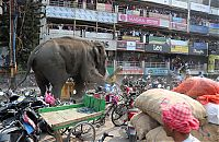 TopRq.com search results: Wild elephant, Siliguri, West Bengal, India