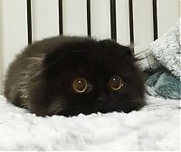 TopRq.com search results: scared little black kitten