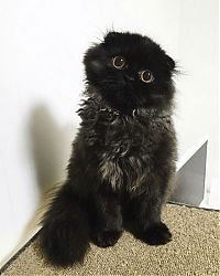 scared little black kitten