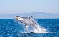 TopRq.com search results: whale cetaceans