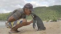 Rescued penguin swims yearly thousands of miles to visit Joao Pereira de Souza