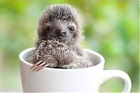 TopRq.com search results: baby sloth