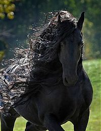 Fauna & Flora: horse with a long mane