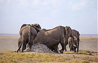 Fauna & Flora: elephants scratching their itch