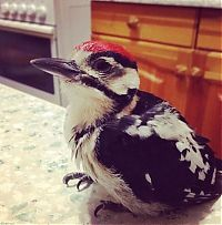 Fauna & Flora: nursed woodpecker