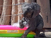 baby elephant fighting a summer heat