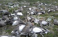 TopRq.com search results: reindeer killed by lightning strike