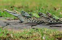 frog and crocodile friends