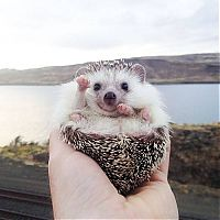 TopRq.com search results: cute hedgehog