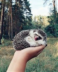 Fauna & Flora: cute hedgehog