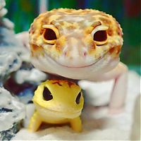 TopRq.com search results: smiling gecko lizard