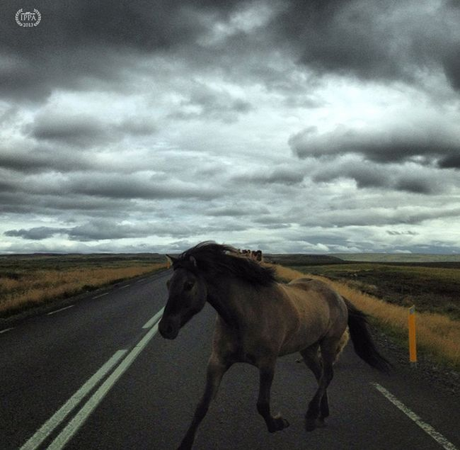 iPhone Photography Awards 2013 winners