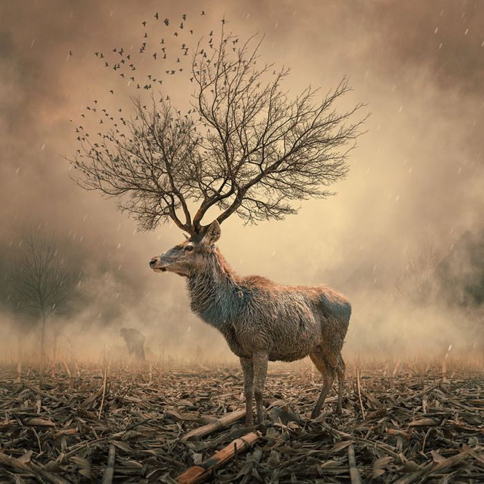 Photo manipulation by Caras Ionut