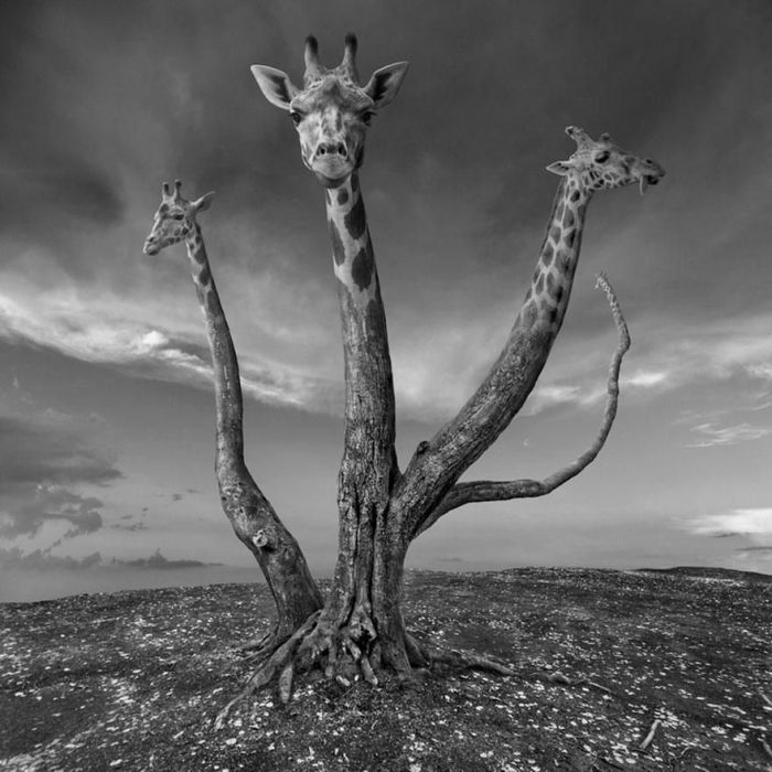 Surreal photography manipulations by Dariusz Klimczak