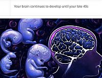 interesting facts about brain