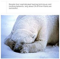 TopRq.com search results: interesting facts about polar bear