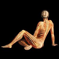 TopRq.com search results: Body Voyage: A 3D Tour of a Real Human Body by Alexander Tsiaras