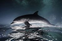 TopRq.com search results: Underwater photography by Jorge Cervera Hauser